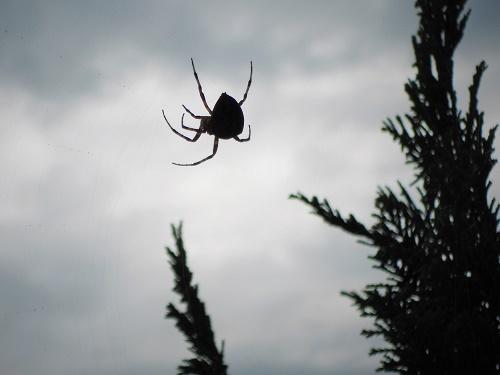 Spinne (10)