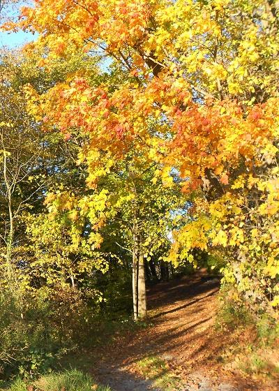 Herbstblaetter (3)