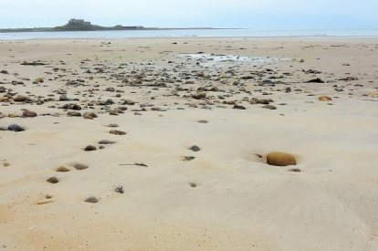 Coast Path (1)