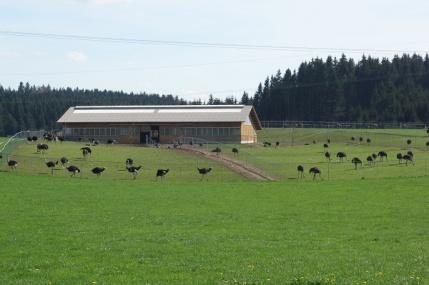 Straußenfarm Waldburg