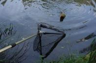 Huch! Ein Gerät piepst jetzt - ein Fisch hat angebissen.