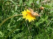 Beschauliches Betrachten von Schmetterlingen ...