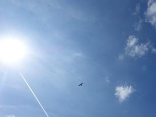 ... dem Himmel. Dort kreist ein Milan.