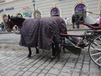 """Damit die Pferdeäpfel nicht auf der Straße herumliegen, ist hinten eine Auffangtasche befestigt, vom geliebten Briten liebevoll """"Scheiße-Bag"""" genannt."""