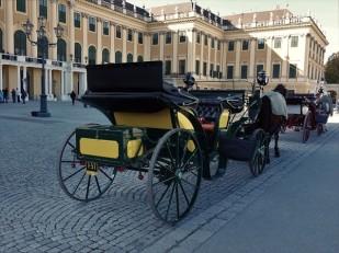 Noch ein Fiaker, dieses vor Schloss Schönbrunn.