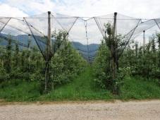 Südtirol lebt vor allem vom Apfelanbau in den typischen Spalieranlagen. Diese Anbauform ist sehr pflegeentisv und muss ständig bewässert werden. Die Bewässerungszeit ist für jeden Hof genau eingetailt, da Wasser in Südtirol knapp ist. Es gehört zu den trockensten Gegenden Italiens.