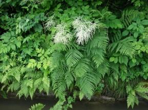 ... und nährt die schönsten Pflanzen. Gott ist hier irgendwo.