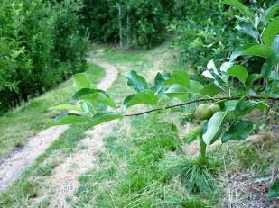 Weiter gehts durch die obligatorischen Apfelplantagen.