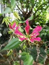 Graziöse Schönheit: Die Orchidee