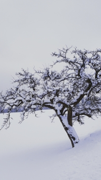 wintertag (18)