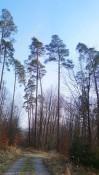 Die Wälder sind noch licht, wir spazieren auch hier in der Sonne.