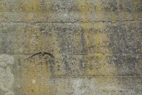 Mauereidechsen gabs überall zu sehen.