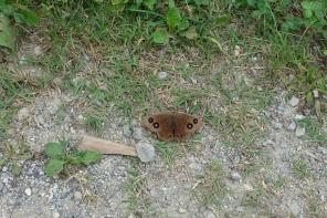 Wer kennt diesen Schmetterling?