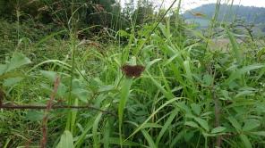 Piemont-2019 Schmetterling (3)